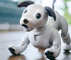 Sony has released a limited edition of aibo in the United States. (Source: hothardware)