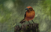 Awe-inspiring oil paintings and water color pictures can be created with the included Nvidia Dabbler and DirectStylus.