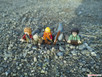Nokia Lumia 1520 (20 MP)
